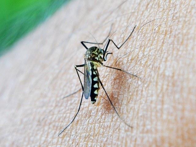 malaria prophylaxe thailand